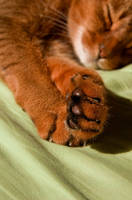 Cat Paws by Studio5