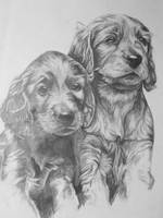 two puppies by ezimmerman