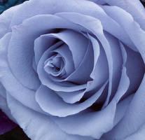 Purple Finality by AvisBlack