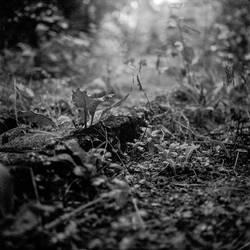 Roll #45 - Kodak BW400CN by pyros