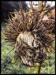 THE END OF A THISTLE by IME54-ART