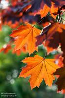Autumn in springtime by Zelma1