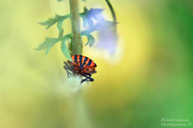 Tiny creature by Zelma1