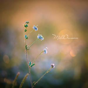 Tiny world by Zelma1