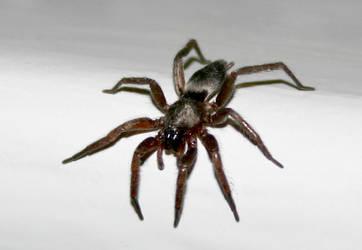 Spider by PureStock