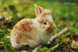 Rabbit baby - 7 by Pebels