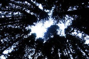 Ghost Trees by TheGhostVirus