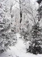 winter by ubern00bish