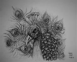 Peacock by Nadirakat