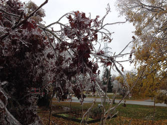 Ice Storm 5 by NovemberLilly