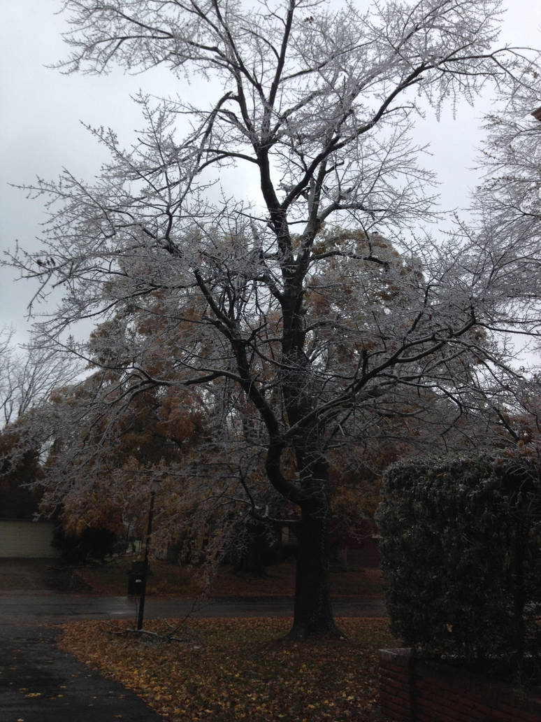 Ice Storm 6 by NovemberLilly