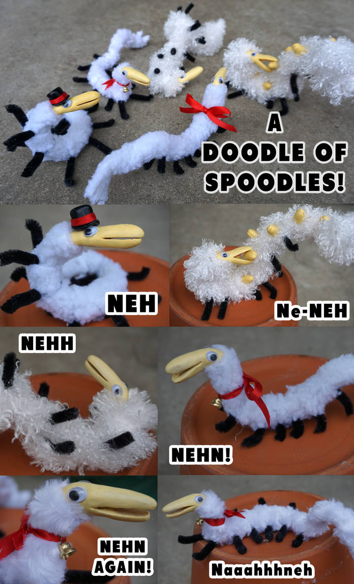 Spoodles in REAL LIFE by Nestly