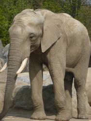 Duisburg: Shaka the Elephant by SSJGarfield