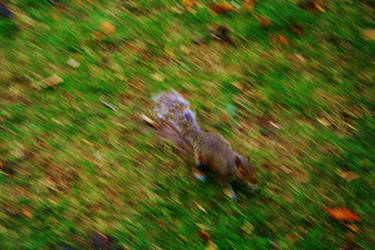 Squirrel by Gloriosa2