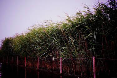 grass by Gloriosa2