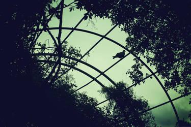 bird by Gloriosa2