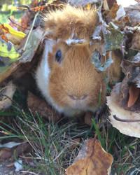 Hey! Find The Piggy! by CheesyThicDoritoLegs