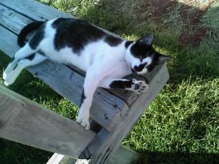 My Cat Said Hi by ILOVEANIME36798