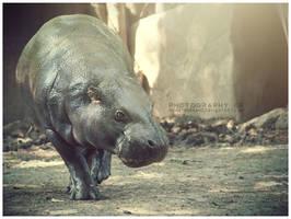 Day 164 - Pygmy by MonsterBrand