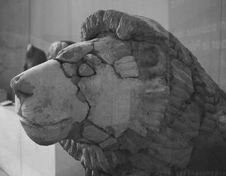 Stone Lion by MonsterBrand