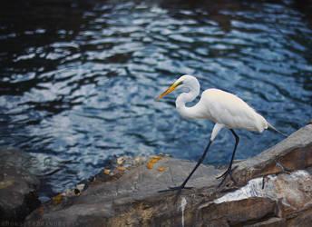 Little Egret by MonsterBrand