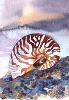 Sea Fossil by TokyoMoonlight