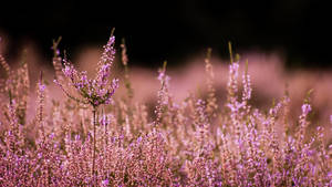 Heath Land by DeborahBeeuwkes