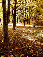 The park in autumn by DorottyaS