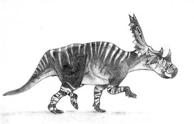 Chasmosaurus belli by Sainte-Vincient