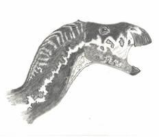 Kritosaurus sp. by Sainte-Vincient