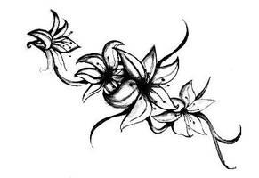 Lily by karolinecosta