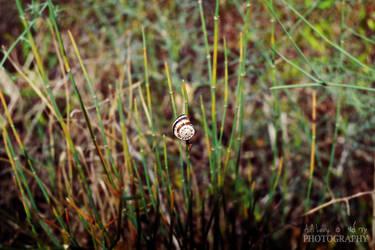 Snail by Adida007