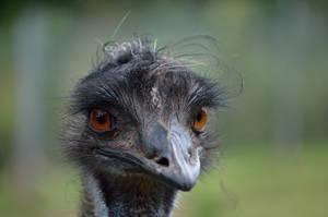 EMU by major-holdups