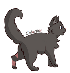 Cinderpelt by lilwinry121