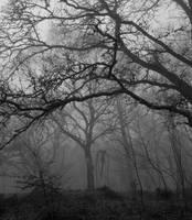 Steinmen Woods by Victor-Surge