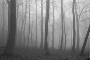 Steinmen Woods Recon by Victor-Surge