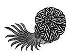 Nautilus 7 of 9 by Rabbitmanrulez