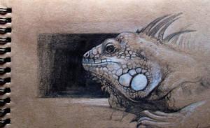 Iguana by SalamanDra-S