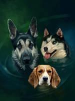 Three dogs by SalamanDra-S