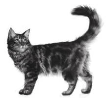 1 hour speedpaint #35 Maine Coon by merkerinn