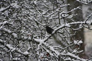 Vogel im Baum by corvintaurus