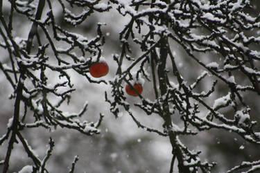Schneeflocken auf dem Apfel by corvintaurus