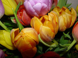 Tulip Flower Street by corvintaurus