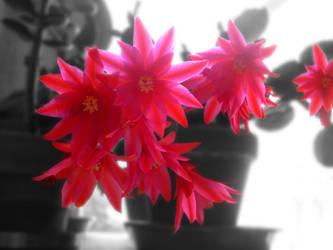Easter Cactus by corvintaurus