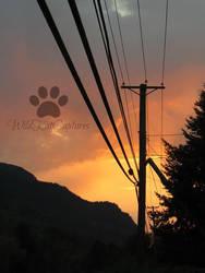 Sunset on VineStreet by WildKatCaptures