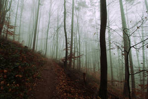 The grim forest III by Malleni-Art