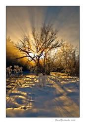 Rays of Life by Mystik-Rider