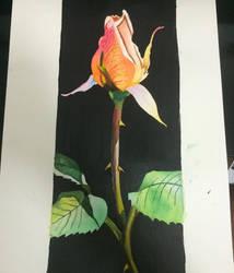 My rose - watercolor  by HarryYY