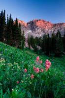 Albion Basin Wildflowers IV by mikewheels