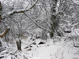Snow WalkII by BreAnn